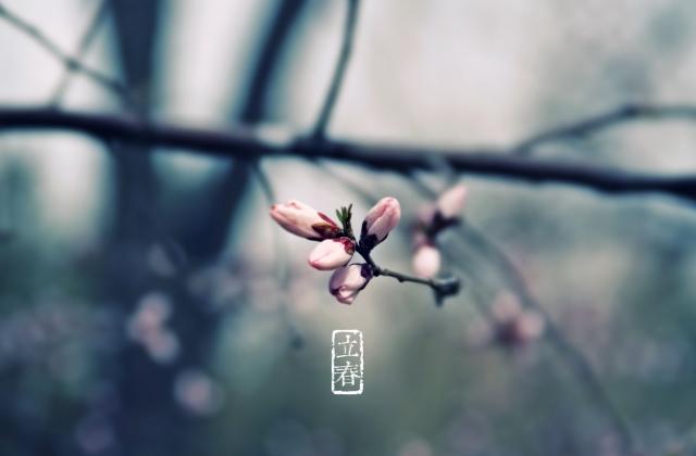 立春祝福武汉的句子:没有一个冬天不会过去,没有一个春天不会到来的句子