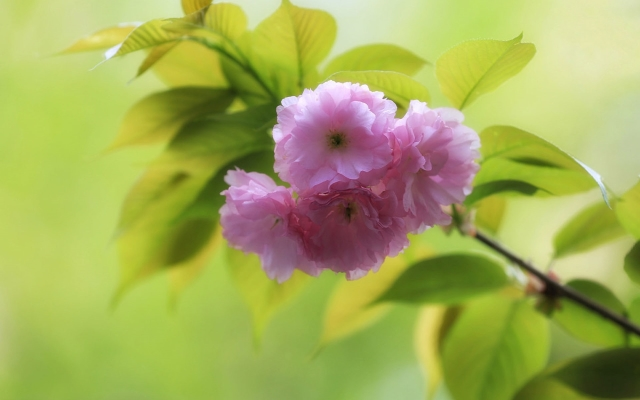 适合赏樱花发的朋友圈句子 拍樱花发的说说心情感慨语句