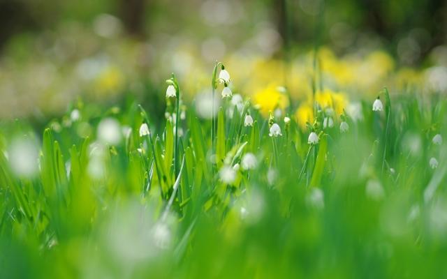 拍花朵发朋友圈怎么写 适合春天发朋友圈的句子简短