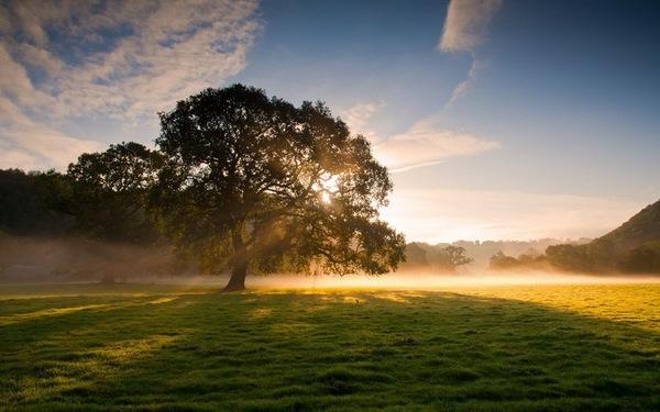 心累的句子说说心情 适合心情低落发的句子
