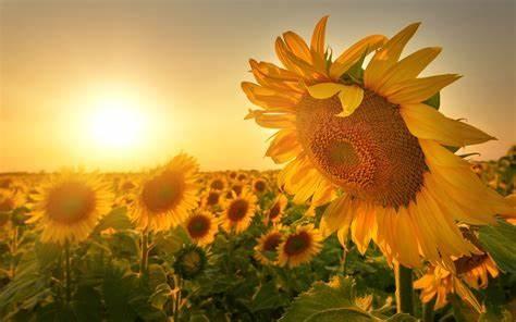 期待爱情但又怕受伤的经典语录,爱情语录大全