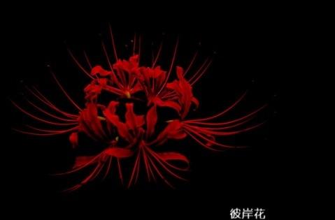 伤心泪流的爱情短语·爱情很火的句子文案